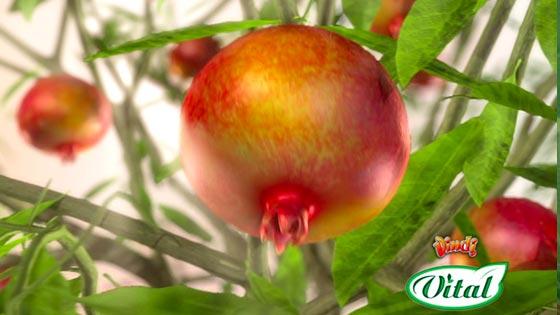 Vindi Vital Pomegranate